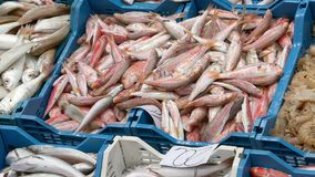 Fresh fish laid out at a market Ken burns effect.  stock video footage