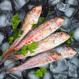 Fresh fish laid out on pieces of ice Royalty Free Stock Images