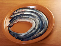Fresh fish lamprey Stock Photography