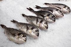 Fresh fish in large chunks of ice Stock Image