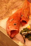 Fresh fish with large open mouths. Paris Royalty Free Stock Images