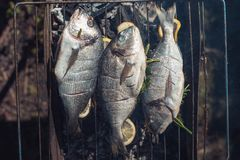 Fresh fish with lemon on the grid Barbeque in the garden in summer prepaired for the rost.  Royalty Free Stock Images