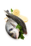 Fresh Fish. Royalty Free Stock Images