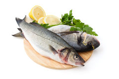 Fresh Fish. Stock Images
