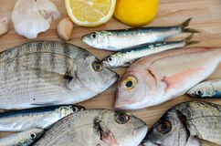 Fresh fish with lemon ready for cooking. Preparing delicious and tasty seafood meal. Uncooked Gilt-head sea bream, Sardines, Commo. N pandora, top view. Healthy royalty free stock photography