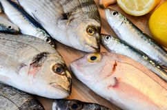 Fresh fish with lemon ready for cooking. Preparing delicious and tasty seafood meal. Uncooked Gilt-head sea bream, Sardines, Commo. N pandora, top view. Healthy stock photos