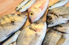 Fresh fish with lemon ready for cooking. Preparing delicious and tasty seafood meal. Uncooked Gilt-head sea bream, Sardines, Commo. N pandora, top view. Healthy stock images