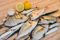 Fresh fish with lemon ready for cooking. Preparing delicious and tasty seafood meal. Uncooked Gilt-head sea bream, Sardines, Commo. N pandora, top view. Healthy royalty free stock image