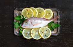 Fresh fish with lemon. On vintage silver tray Royalty Free Stock Photos