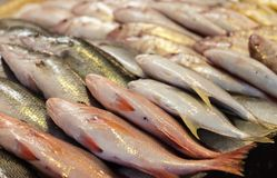 Fresh Fish at the Local Market Royalty Free Stock Photo
