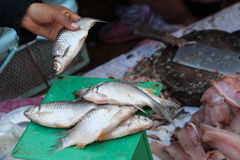 Fresh fish in local market Royalty Free Stock Photography