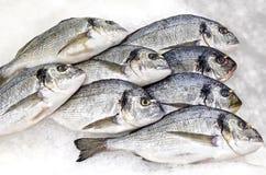 Fresh fish lying on ice Stock Image