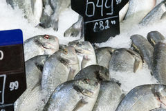 The fresh fish lying in ice Stock Photo