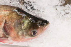 The fresh fish lying in ice Royalty Free Stock Photography