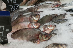 The fresh fish lying in ice Stock Photography