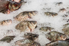 The fresh fish lying in ice Royalty Free Stock Photo