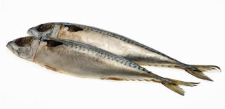 Fresh fish Mackerel, tuna, saba, on a white background. Royalty Free Stock Image