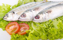 Fresh fish on macro Stock Images