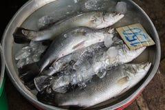 Fresh fish Royalty Free Stock Images