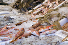 Fresh fish at market Royalty Free Stock Images