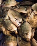 Fresh fish in the market Stock Image