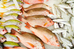 Fresh Fish on the Market. Ready for sale Stock Photography