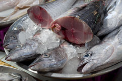 Fresh fish at the market Royalty Free Stock Photo