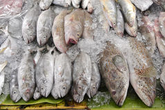 Fresh fish in at market Stock Photo