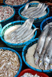 Fresh fish on market Stock Photos