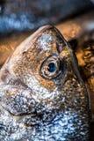 Fresh fish. At the market royalty free stock image