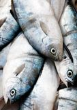Fresh fish at market Royalty Free Stock Image