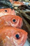 Fresh fish on a market Stock Image