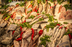 Fresh fish in the market. Athens, Greece royalty free stock images
