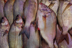 Fresh fish at market background. Fresh fish displayed at the fish market stock photography
