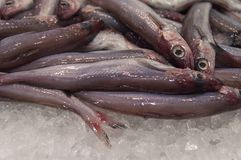 Fresh fish on the market. Fresh fish on the market in Barcelona, Spain Royalty Free Stock Photos