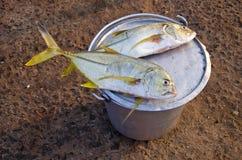 Fresh fish in market on beach, India Stock Photo