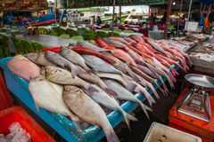 Fresh Fish on the Fish Market in Borneo Malaysia. Fresh Fish on the Fish Market in Borneo / Sandakan Malaysia Royalty Free Stock Images