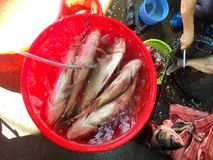 Fresh fish Market Royalty Free Stock Images