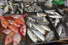 Fresh fish on market counter Stock Images