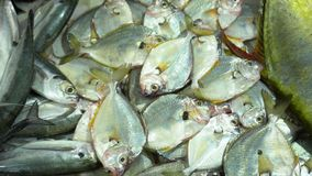 Fresh fish on a market counter in Vietnam. A large number is fresher than fish on iron supports. Vietnam. cutting fish. On this video you can see market place on stock footage