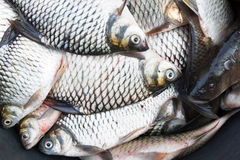 Fresh fish. Fish in a market display Stock Photos