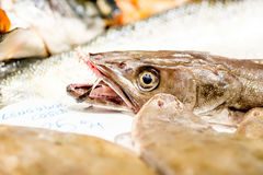 Fresh fish on market display. Fresh fish on cooled market display royalty free stock photos