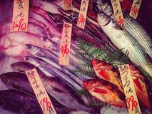 Fresh fish on market display. Fresh fish in Japanese royalty free stock photo