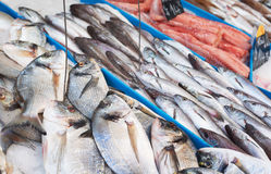 Fresh fish on market in France Royalty Free Stock Photos
