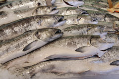 Fresh Fish Market Fresh Fish Market. Salmon at a fresh fish market, packed in ice Royalty Free Stock Images