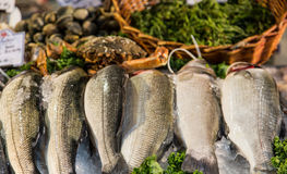 Fresh Fish in Market royalty free stock photos