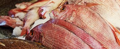 Fresh fish at the market. Fresh fish in ice at the market royalty free stock photo