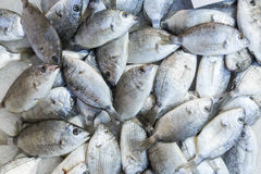 Fresh fish on a market Royalty Free Stock Photography