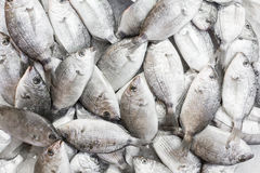 Fresh fish on a market Royalty Free Stock Images