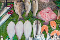 Fresh fish at a market in Istanbul Royalty Free Stock Image